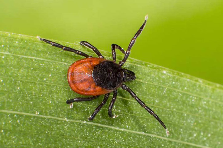 Lyme Disease - Know the Facts